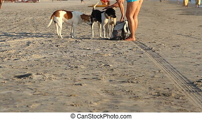 dogs walking on the beach. Goa state Querim beach