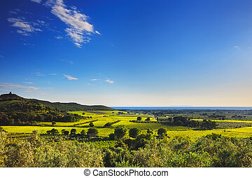 Bolgheri and Castagneto vineyard and Elba island. Maremma...