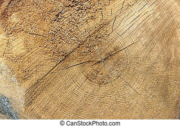 Close-up Of Old Pine Tree Rough Cross Section Background...