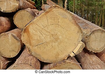 Many Big Pine Wood logs In Large Woodpile Background Texture...