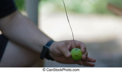 Man puts apples on a rope with needle - Man puts apples on a...