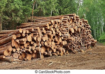 Woodpile From Sawn Pine And Spruce Logs For Forestry...