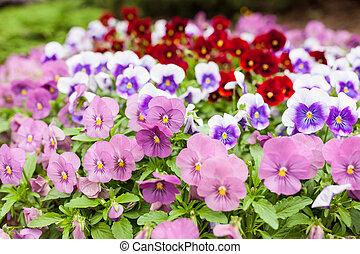 Beautiful violet flowers - Group beautiful violet flowers...
