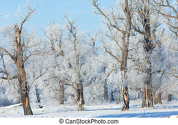 winter frost. a deposit of small white ice crystals formed...