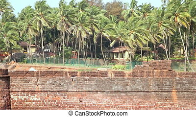 Palm trees, bushes and houses with blue sky - Green Palm...