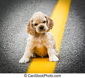 stray dog sitting on the road - cocker spaniel