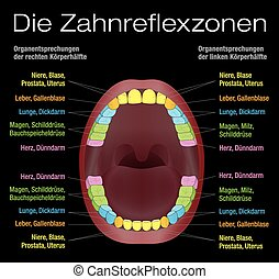 Teeth Reflexology Equivalent Organs - Teeth reflexology...