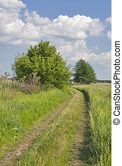 Rural landscape with country road