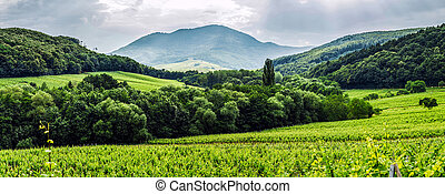 Thunder-storm weather over the vineyards, Alsace, France