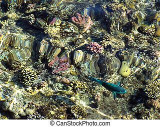 coral reefs in Sharm El Sheikh, Egypt