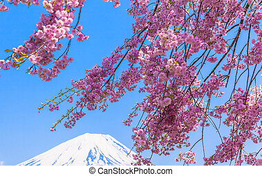 Mount Fuji under the Weeping cherry blossom