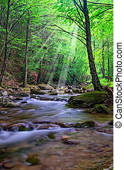 river with low water - river with sunbeam in the forest