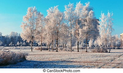 City Park With Hoarfrost on Grass in a Cold Frosty Day