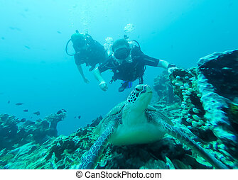 Two scuba divers and a turtle in Lombok, Indonesia