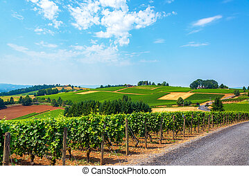Hills of Vineyards - Hills covered in vineyards in the...