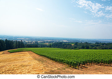 Vineyard and Willamette Valley - View of a vineyard with the...