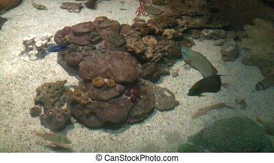 fish ramp underwater
