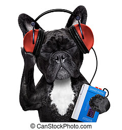 dog listening music - french bulldog dog listening to oldies...