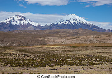 Volcanos on the Altiplano - Snow and ice covered peaks of...