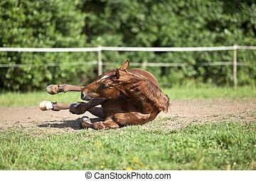 Horse fall down crash