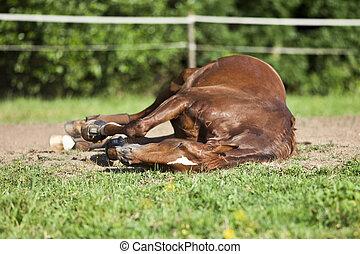 Horse sleep on meadow