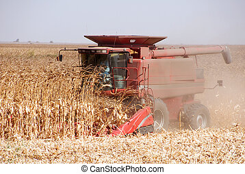 Harvesting Corn - Combine harvesting corn, San Joaquin...