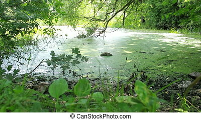 overgrown pond in wildlife