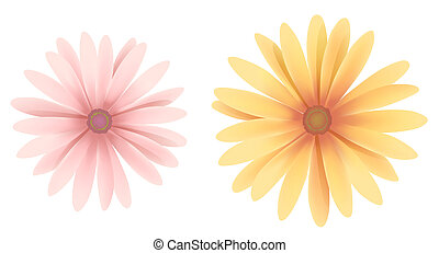 daisy - drawing of two color daisies in a white background