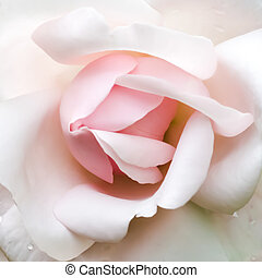 Rosebud - A New Dawn rosebud with only the pink and white...