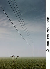 Cow Parsley Under The Telephone Line - The mist covers the...