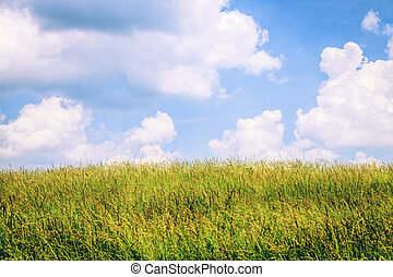 Grass field - Sunny blue sky over a field of tall grass in...