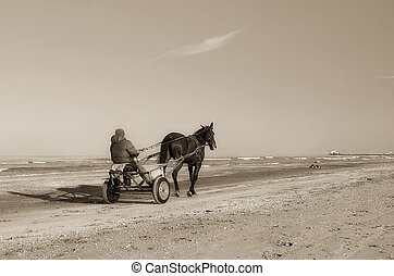 horse-drawn carriage on the shoreline