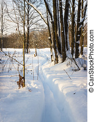 Ski track in deep snow in a forest glade