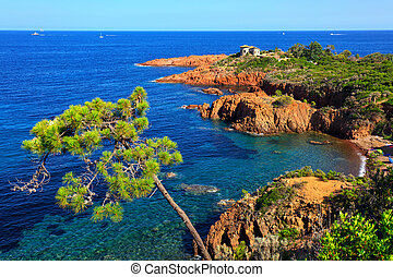 Esterel, tree, rocks beach coast and sea. Cote Azur,...