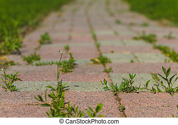 Low View of a Brick Path