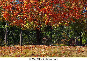 Colorful foliage of deciduous trees - Fall in the park with...