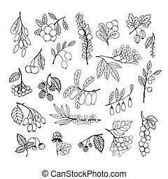 Set of garden and wild hand-drawn sketch berries -...