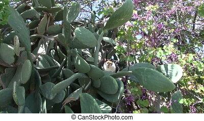 cat in derelict Greece garden - cat in derelict Greece...