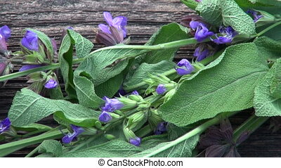 bunch of flowering sage with leaves on old wooden background...