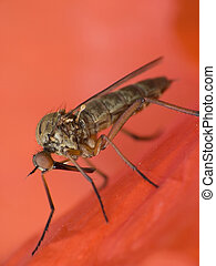 Mosquito - Bloodthirsty mosquito which drinks human blood