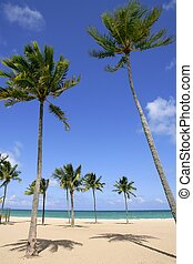 Beach in tropical Florida day with palm trees