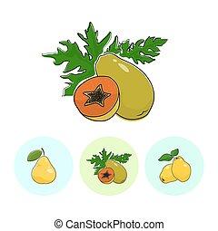 Fruit Icons, Papaya, Pear , Quince - Fruit Papaya on White...