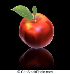 vector nectarine isolated on black background - red vector...