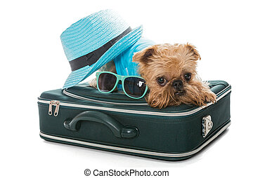 Dog breed Brussels Griffon and suitcase - Dog breed Brussels...