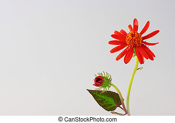 Flower with a bud