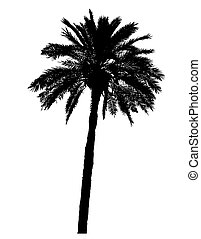 silhouette of palm trees realistic vector illustration...