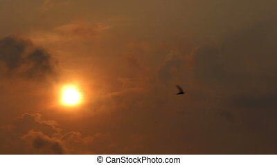 view of flying birds against sun hidden behind clouds