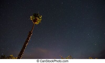 Palm Tree against Clear Starry Night Sky Time-lapse, star...