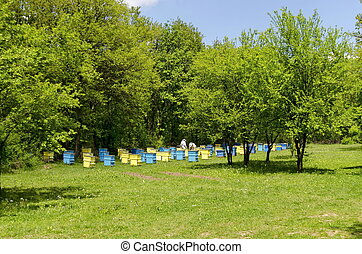 Two bee-masters in veil at apiary work among hives, Zavet,...