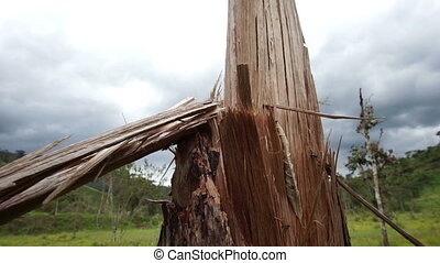 Broken and Splintered Tree Pan - Panning close up shot of a...